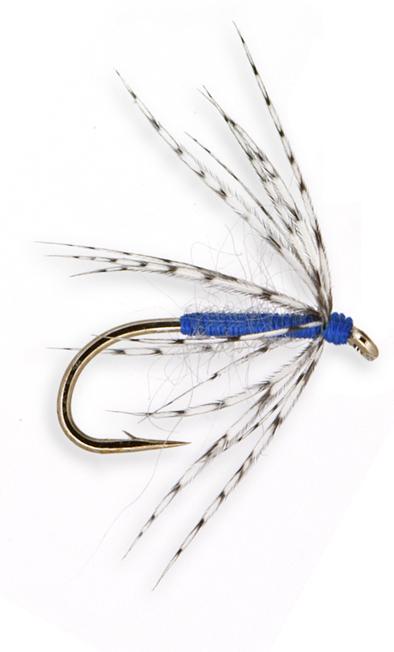 Blue Partridge Shadow 001
